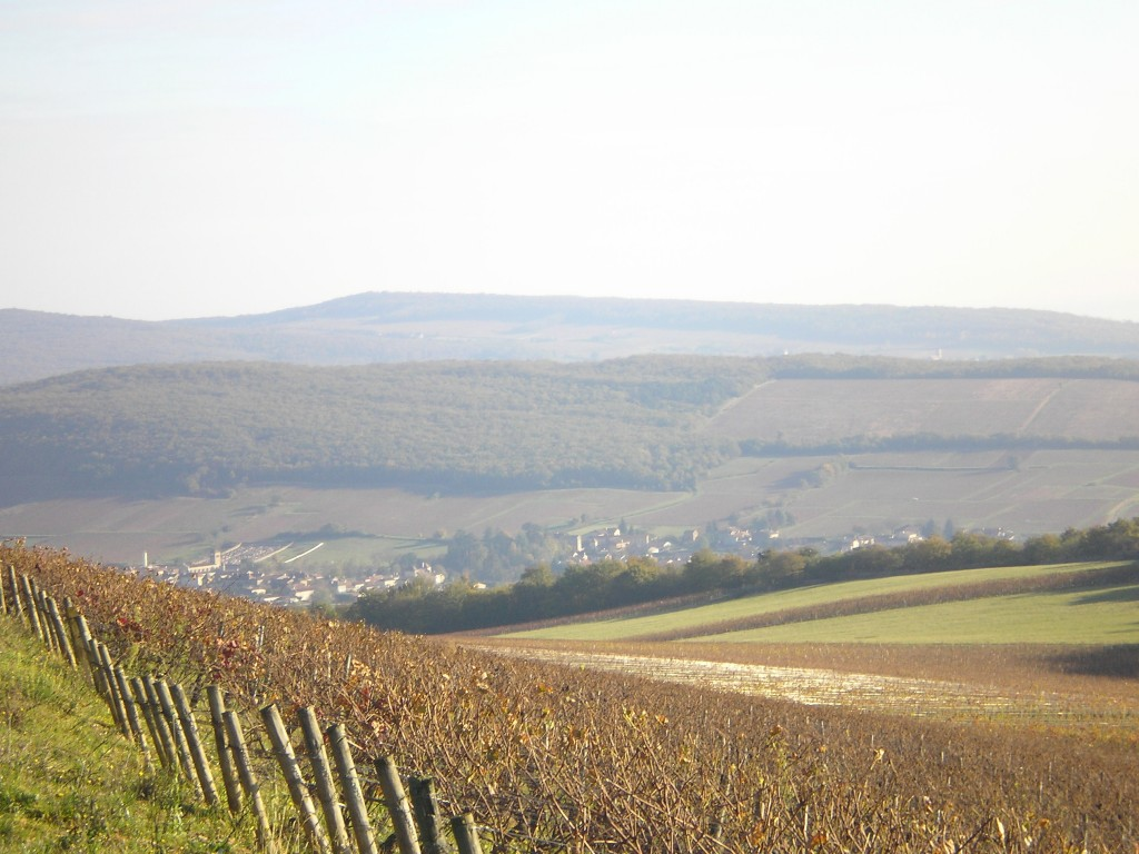 View of Macon Ige Vines