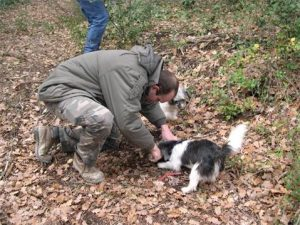 Man with dog searchin gfor truffles in Provence