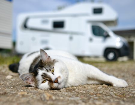 Can we bring our pets with us on a campervan trip?