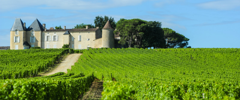 A vineyard and chateau in France