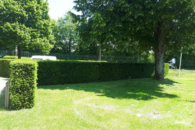 Spacious pitches with hedges in between each for privacy