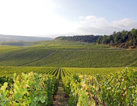 Follow the Yonne Wine Tourism Trail for a great week in Burgundy