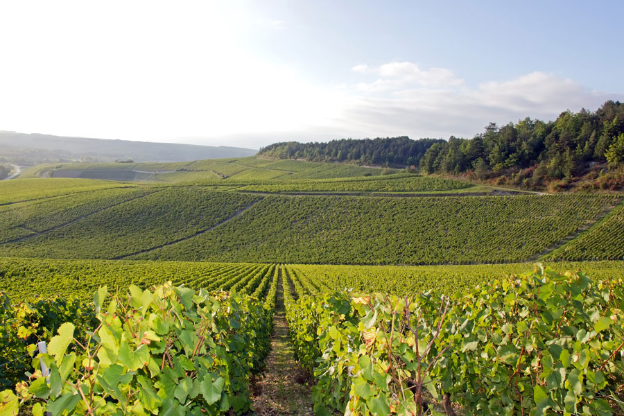 The Chablis Wine Region