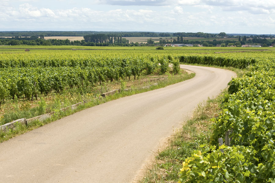 Tour de France 2019 is a Tour de Vin, passing through many French wine regions which will make for a great drive in your campervan.