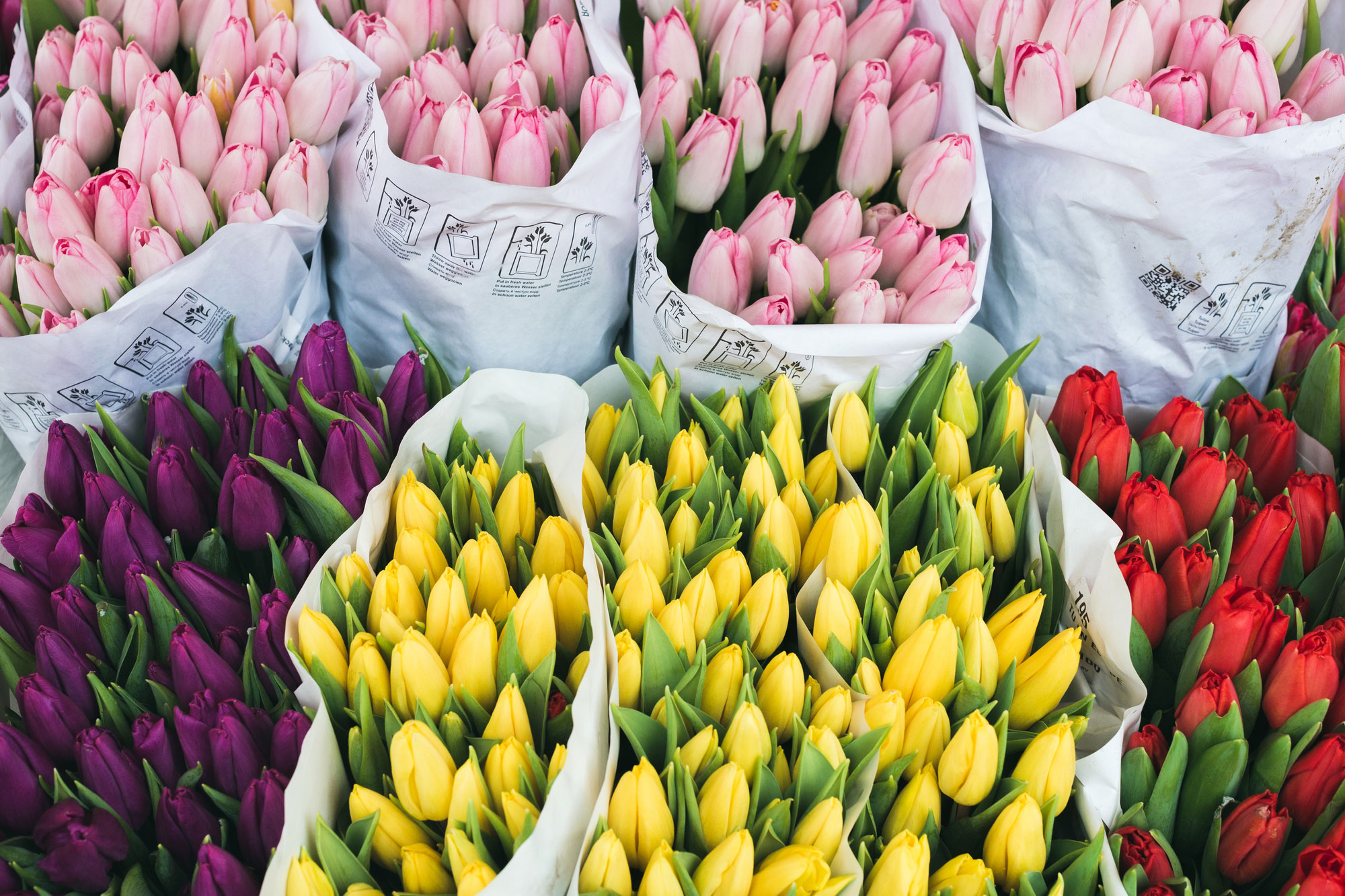 Visit the flower market at Mons for a spectacular array of spring flowers