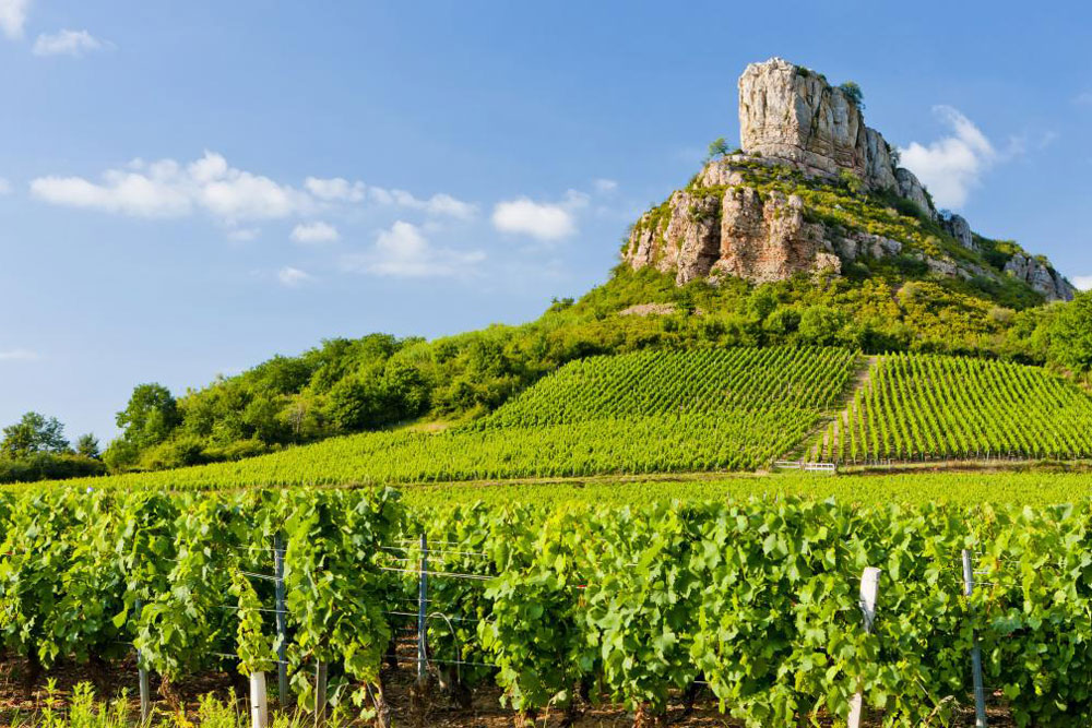 Vineyard in Mâcon ©visitfrenchwine.com